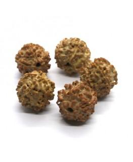 Perles graines de rudraksha 18mm