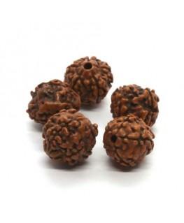 Perles graines de rudraksha 12mm
